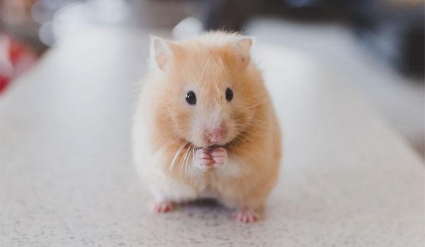 ペットの写真